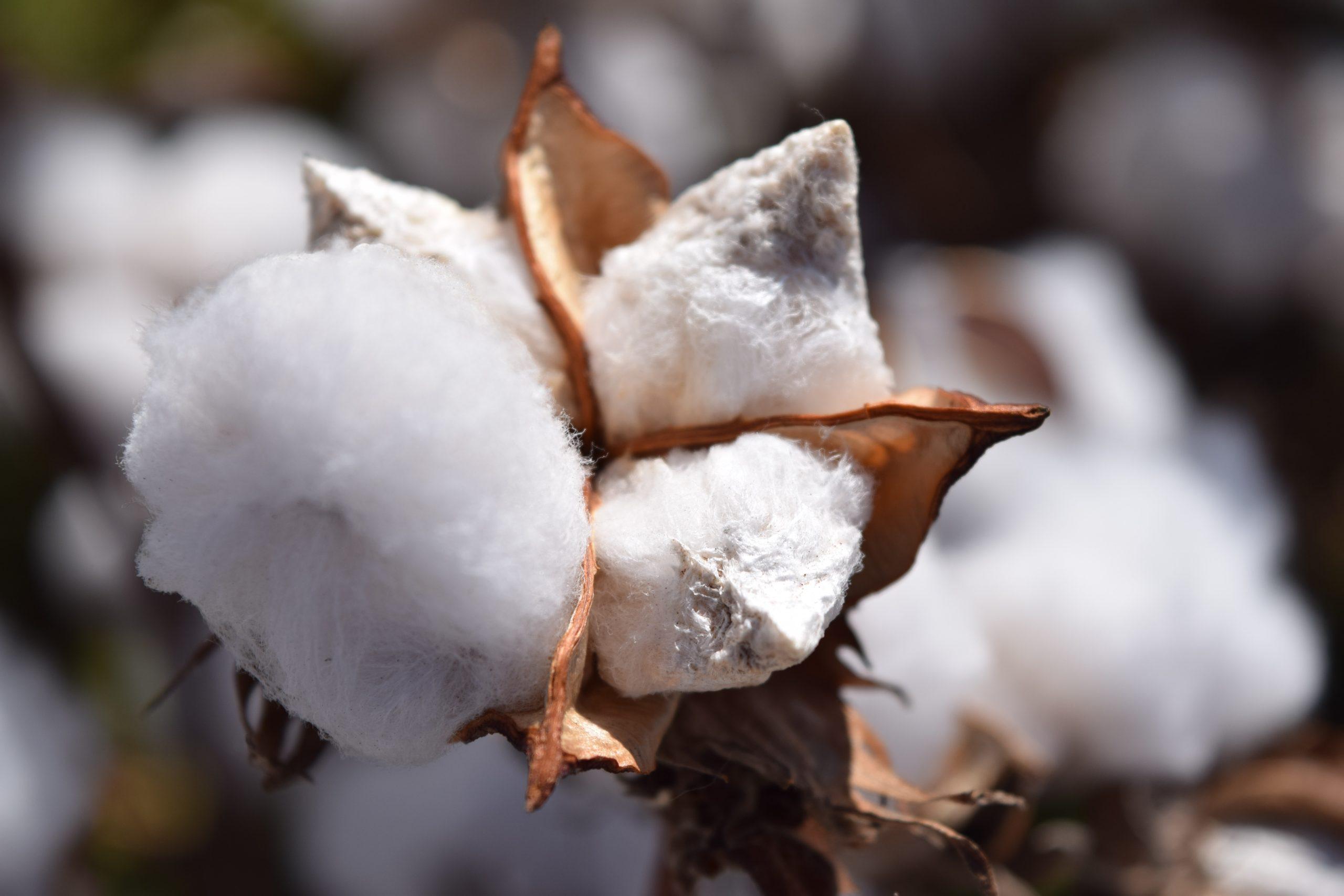Cotton Facts